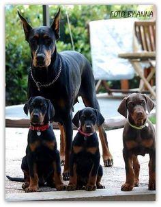 #Doberman Family