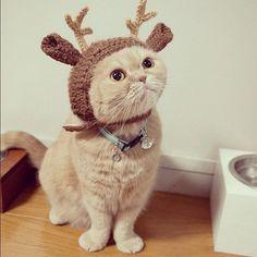 festive holiday cat