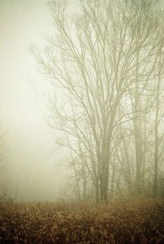 fog makes me think of cold rainy days....