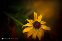 East Tennessee, Summer Flowers, Exhausted, Autumn Leaves, Itunes, Beautiful Homes, Sunshine, Workshop, Around The Worlds