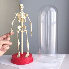 This is Winston P. Boneybody. Hes a likable fellow who is just perfect at making your shelf or desk a unique spot!  Winston is an anatomically correct plastic model of the human body, perfect for teaching, learning, or making others wonder where in the world you got him.  Winston himself is in great shape, the dome he lives in has some light scuffing and two 1/4 minor crackles (the kind plastic gets over time), but nothing unexpected for a vintage piece.  Winston himself stands 12 tall, and…