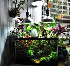 10g Aquatic Jungle Paradise - Planted Space