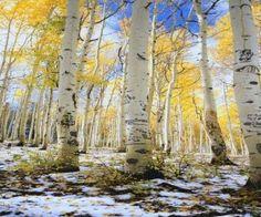 talvi, keltainen, valokuvaus, lumi
