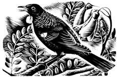 Hunter's is a family owned winery in Blenheim, Marlborough. Producers of world famous New Zealand Sauvignon Blanc and Chardonnay. Tui Bird, Nz Art, Hunter S, Pyrography, Printmaking, Wines, New Zealand, Artsy, Sculpture