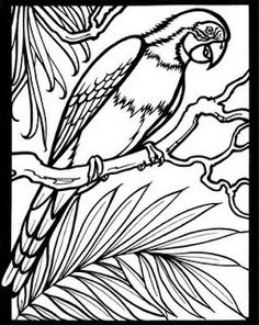 Welcome To Dover Publications Rain Forest Wildlife Stained Glass Coloring Book