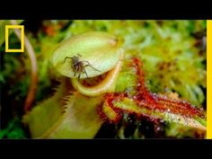 Eerie Time-Lapse of Bug-Eating Plants | Short Film Showcase - YouTube