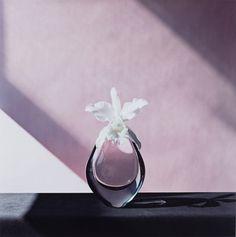 """Orchid, still life"" 1980s, photo by American photographer ROBERT MAPPLETHORPE (1946/1989)"