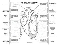 Anatomy Labeling Worksheets - Bing images | Esthetics ...