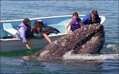 Lilly, the whale Dana Point's residents and community helped free from fishing line. What a great story.