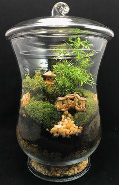 terrarium plante avec une petite maison