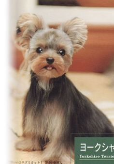 yorkie designer cuts with knot Japanese Dog Grooming, Japanese Dogs, Japanese Style, Yorkie Terrier, Yorkie Puppy, Yorkie Cut, Puppy Face, Dog Grooming Salons, Cat Grooming