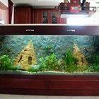 Freshwater community tank cca 700liter  700 literes társas akvárium