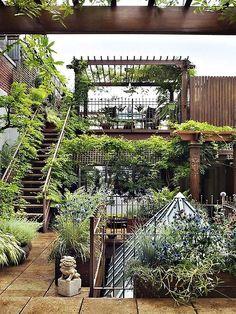 A lush rooftop garden