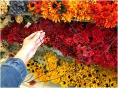The autumn is back, and the plants have started losing their colors again. It's autumn, and one cannot blame Mother Nature for the drastic changes. Plant Shed, Next Flowers, Dry Leaf, Fall Plants, Star Shape, Flower Delivery, Take Care, How To Run Longer, Pansies