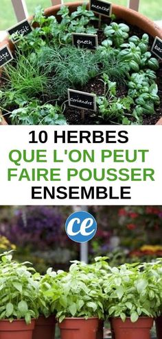 10 aromatic herbs you can grow together easily Comment Planter, Aromatic Herbs, Garden Types, Grow Together, Growing Herbs, Green Garden, Gardening For Beginners, Tropical Plants, Garden Planning