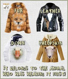 Fur is dead animals. Leather is dead cows/horses. Sheepskin has no excuse, and why can't we just collect down feathers from baby birds instead of killing them? Cane Corso, Sphynx, Chinchilla, Vegan Animals, Farm Animals, Wild Life, Rottweiler, Pitbull, Cruel People