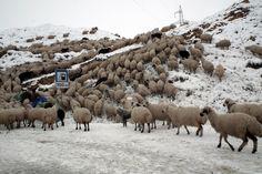 on the road Yeghegnadzor Ararat