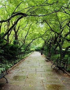 tree canopy - Google Search