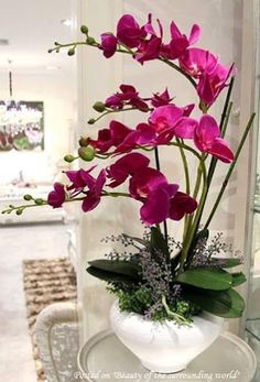 50 pcs/bag orchid seeds bonsai Butterfly phalaenopsis orchid potted flower seeds perennial garden plant for home garden flowersBest Orchid Arrangements With Succulents And Driftwood - Decomagzbest price high artificial flower phalaenopsis set overall Silk Orchids, Orchids Garden, Phalaenopsis Orchid, Silk Flowers, Flowers Nature, Orchid Flower Arrangements, Orchid Centerpieces, Artificial Flower Arrangements, Orchid Plant Care