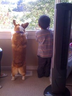 Corgis play well with kids, | 108 Reasons Why Corgis Really Are That Great