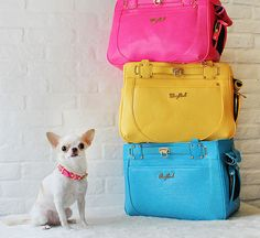 20 Smart and Stylish Pet Carriers via Brit + Co. Wooflink Hipster 2