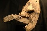 """skull of the """"vampire of venice"""" with a brick stuck in his jaw"""