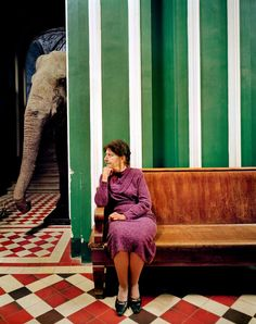 PsBattle: Woman sits on bench with elephant in the room