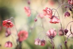 ColorMe Weekly photography colour palette of flowers and blooms