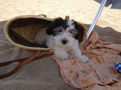 Cotton De Tulear, Gatos Cats, Facebook, Bed, Dogs, Animals, Toss Pillows, Beds, Animales