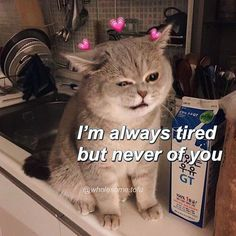 I love you memes For him funny. I love you memes Are you looking for funny I love you memes? We have the best collection that can surely make your loved one crack up. Cute Cat Memes, Cute Love Memes, Funny Memes, Love You Memes, Top Memes, Funny Reaction Pictures, Funny Pictures, Uplifting Memes, Memes Amor