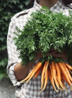 Carrots are rich in beta-carotene, which the liver converts into vitamin A & the retina into rhodopsin, necessary for night vision.  It is also shown shown to protect against macular degeneration & cataracts.  Falcarinol is a natural pesticide produced by carrots to protect its roots from fungal diseases. Studies have shown it reduces lung, breast & colon cancers.  Their antioxidants aid aging by slowing cell damage caused by sun exposure & wrinkles. They are powerful antiseptics, too!
