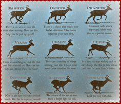 Divining with Reindeer - CarrieParis.com