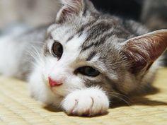 Kitten on The Tatami
