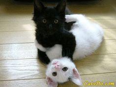 """Como não deixar a casa com """"Cheiro de Gato""""- Muito fácil e garantido!!! http://miadosnaweb.blogspot.com.br/2016/06/como-nao-deixar-casa-com-cheiro-de-gato.html"""