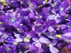 Centuries Old Recipe for Violet Flower Syrup + Health Benefits Old Recipes, Cooking Recipes, Healthy Recipes, Apple Pancake Recipe, Dill Sauce For Salmon, Polish Recipes, Polish Food, Down On The Farm