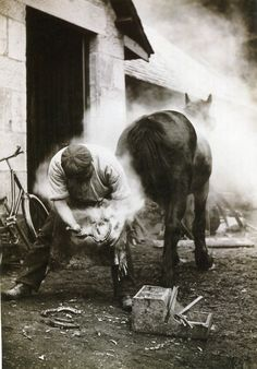 """National Geographic image of the day!  """"Burning the hoof"""" before shoeing it by William Reed, Scotland, 1921."""