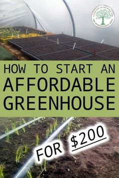 If you want to build a cheap greenhouse on your own out of basic materials we ll show you how to do it for 200 or less DIY greenhouse gardening Cheap Greenhouse, Build A Greenhouse, Greenhouse Gardening, Greenhouse Ideas, Gardening Tips, Greenhouse Growing, Texas Gardening, Potager Garden, Garden Pond