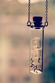 dandelion in a small jar. LOVE. diy??