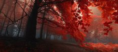 Sacred shivers by Janek Sedlar on 500px