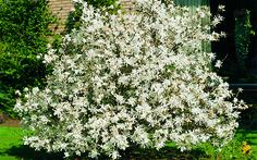 Cómo plantar un arbusto de flor en www.tuinen.es