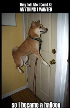 Too funny http://sulia.com/my_thoughts/daf8da9e-ac8c-4fd2-a0cb-c2cef2ae0102/?pinner=121634193