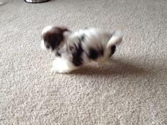 Look at me! I'm a  ! Hoppity hop hop!