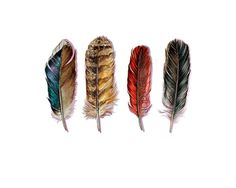 País plumas  Mallard búho Cardenal Crow  impresión por jodyvanB, $25.00