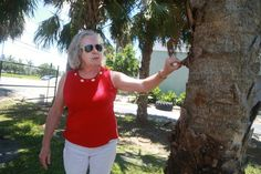 Newest threat to palm trees in Florida - Sun Sentinel
