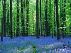 Blue Forest - Belgium   Flickr - Photo Sharing!