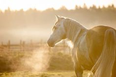 Does your horse have asthma? Find out how you can help him through management and environmental changes.