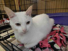 ALBUS is available for adoption from @CUHumane #Urbana #Champaign #IL www.cuhumane.org PINNED 9/28/15 (CHAMPAIGN COUNTY HUMANE SOCIETY) Please click on the PET HARBOR link to see full BIO. Thanks.