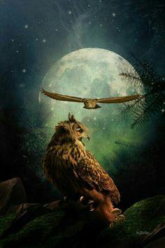 ♡ Hoot owl artwork #owls