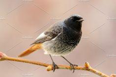 Birds life by José Manuel Gelpi. For blogs.