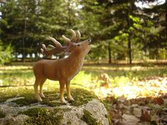 Portugal, Red Deer, Animals, Animales, Animaux, Animal, Deer, Animais